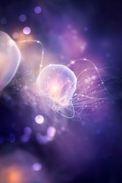 'Celestial Jellyfish'