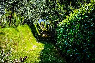 Italian green path jen copy.jpg