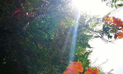 orange flowers and light.jpg