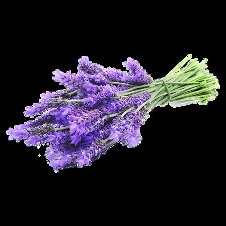 lavendar-drawing-lavender-sprig-6.png