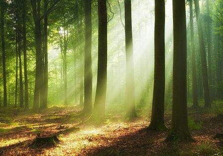 Il canto della Luce