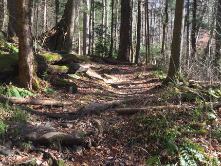 How walking in a forest has informed modern statistics.