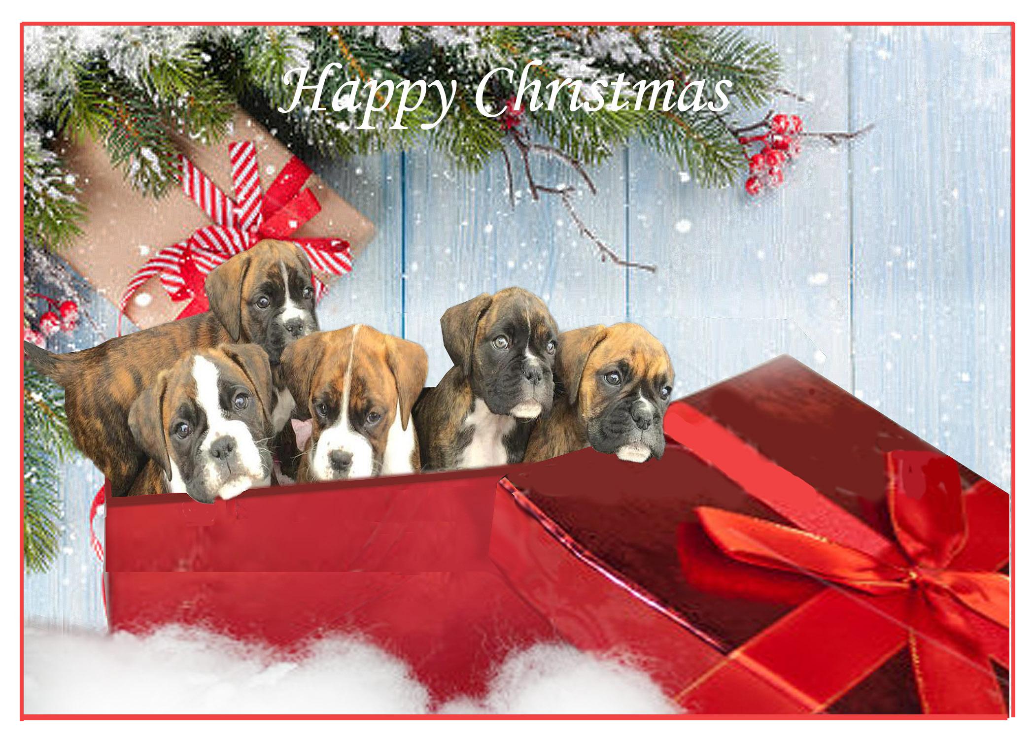 Puppies Xmas