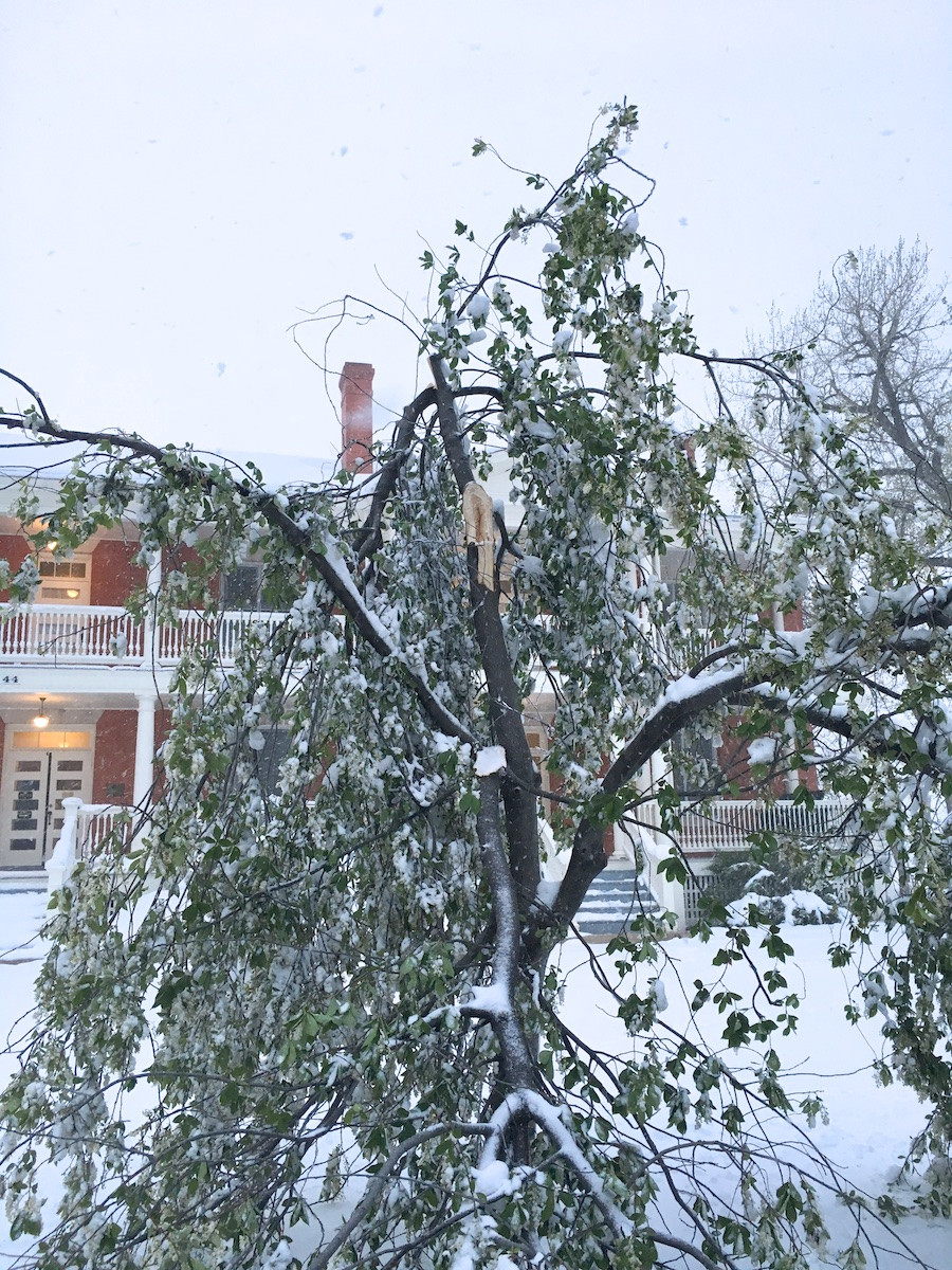 damage from heavy spring snow