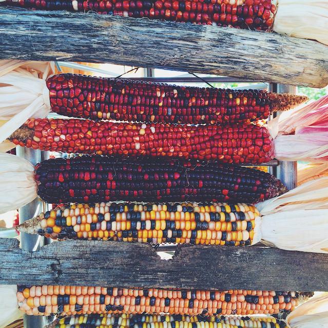 Downtown Growers' Market corn