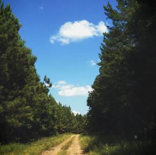 Elizabeth_Landscape.jpg
