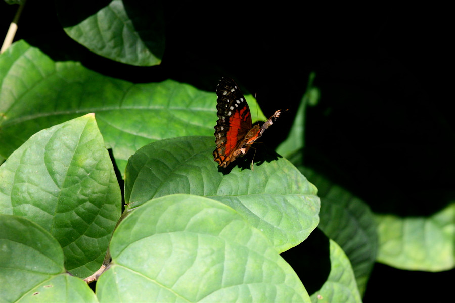butterfly at the Butterfly Pavilion