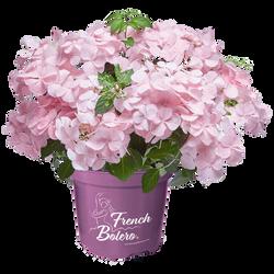 French Bolero® Pink
