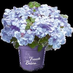 French Bolero® Blue