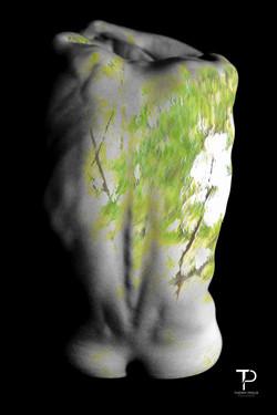 Murmures de la forêt