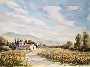Sunflower fields watercolour by David Mather