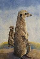 Meerkats. Watercolour by David Mather.