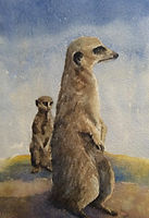 Meerkats. Watercolour by David Mather.