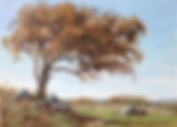 Windswept hawthorn Dartmoor, oil painting by David Mather