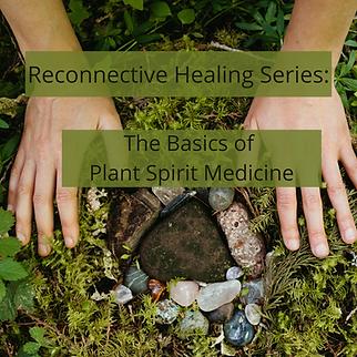 the basics of plant spirit medicine.png
