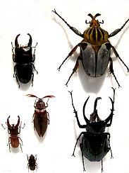 beetle-3497169_1920.jpg
