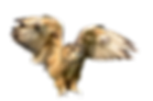 animals-2825831_1920.png