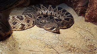 snake-3364937_1920.jpg