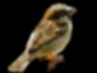 animal-3488067_1920.png