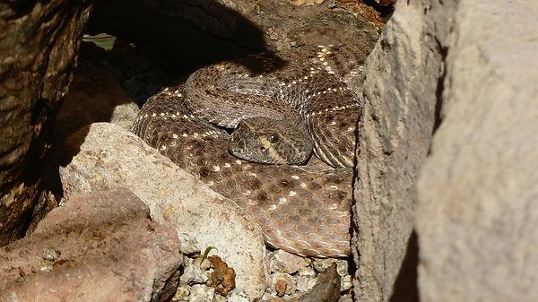 snake-3586468_1920 (1).jpg
