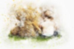 teddy-2578812_1920.jpg