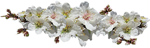 flowers-4507585_1920.png