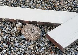 snake lot 205 3 30 19.jpg
