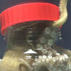 La Pieuvre, reine des profondeurs