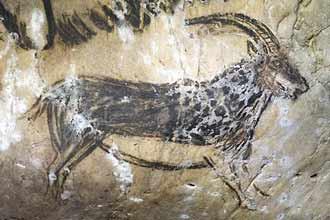 Grotte de Niaux. Peinture pariétale, Bouquetin
