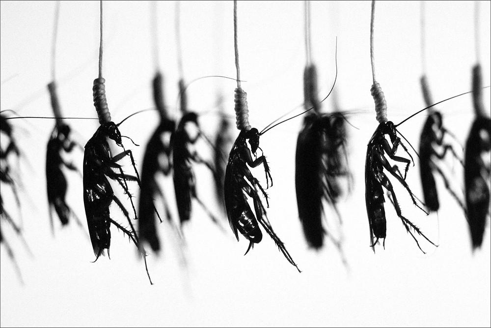 Hanging, Execution series de Catherine Chalmers, épreuve argentique, 2000, Etats-Unis.jpg