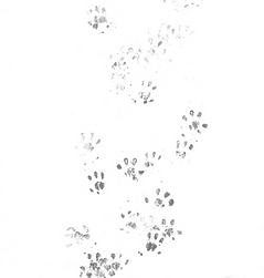 Pawprints_edited.png