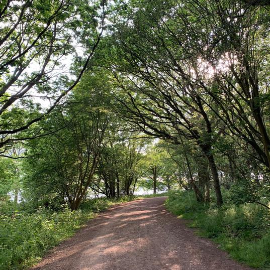Rutland Water Wood