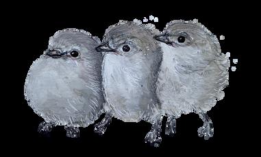 Three Little Dickie Birds