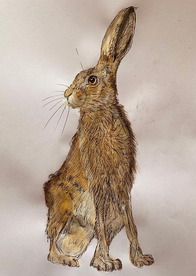Hare.jpeg