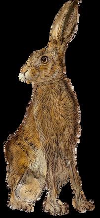 O'Hare of Ridlington