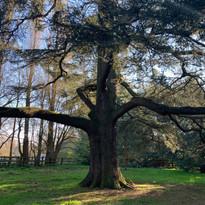 Rutland County Council Tree