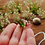 Thumbnail: Scottish sea glass sterling silver resin sphere necklace