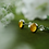 Thumbnail: Buttercup petal 925 sterling silver resin studs