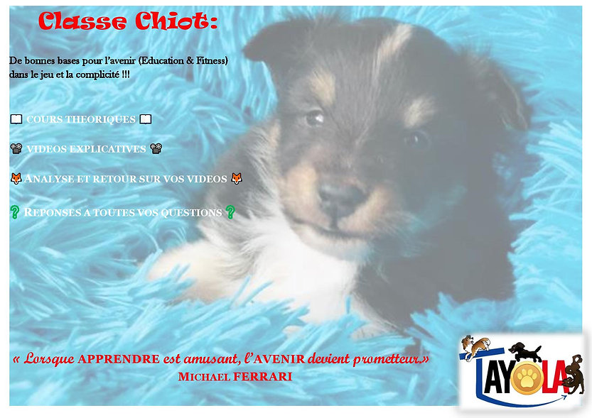 2020-04 Affiche chiot2904-page-001.jpg