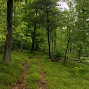 Access Trail