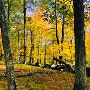 Autumn on MKFF