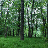 Our Hickory Forest