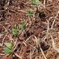 RS finaliza plantio de soja