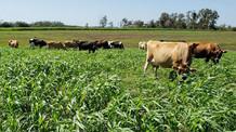 O que o agronegócio precisa mostrar para a sociedade urbana?