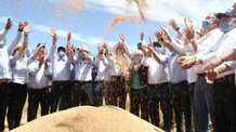 Cruz Alta recebe a Abertura Oficial da Colheita do Trigo no RS