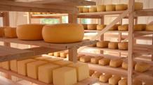 Produtores de queijo artesanal serrano agora podem aderir ao selo arte e comercializar o produto no