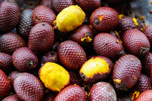 Frutas, castanhas e verduras nativas do Brasil estão em nova lista de espécies da sociobiodiversidad