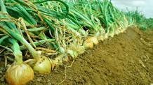 No Dia do Produtor Rural, Ministério da Agricultura celebra 161 anos de história
