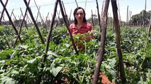 Mulheres representam 80% dos fornecedores de produtos para o Programa de Aquisição de Alimentos