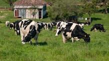 Insumos derrubam margem do produtor de leite em 50%
